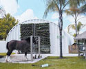 This S-Series steel panel arch building is perfect for the Florida climate that requires heavy wind loads and extra heavy gauge panels to reduce the maintenance cost for something as big as a Budweiser Clydesdale horse.